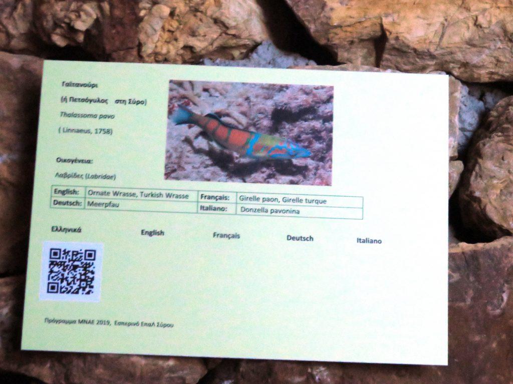 καρτέλα πληροφοριών για ακουστική ξενάγηση Ενυδρείου Σύρου